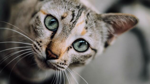 Чип и дело: собак и кошек хотят внести в реестр с владельцами
