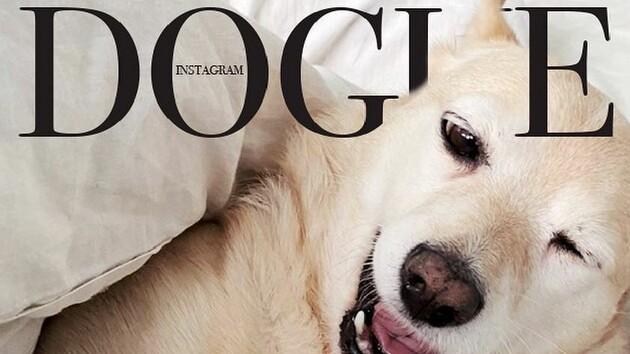 Собаки стали моделями для глянцевых обложек в стиле Vogue: креативный флешмоб