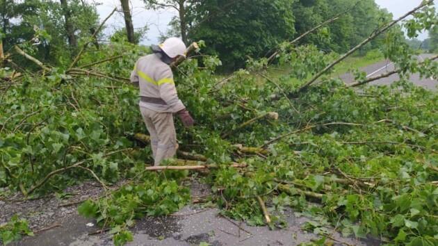Поваленные деревья и затопленные дома: что натворила непогода в Винницкой области (фото)