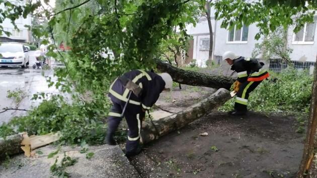 Оборванные провода и поваленные деревья: непогода бушевала в Хмельницкой области (фото)