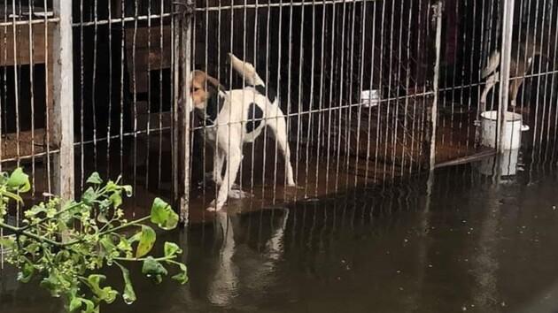 В Ивано-Франковской области затопило приют для животных: как спасают собак (фото, видео)