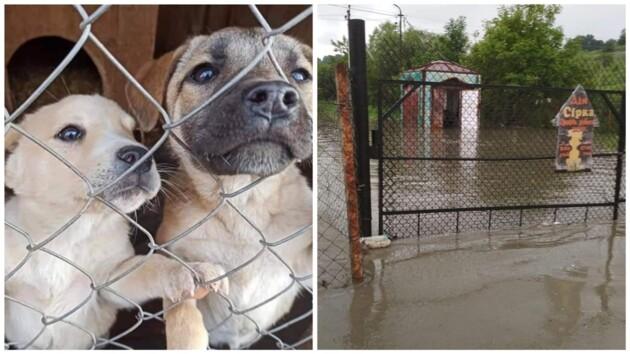 На Прикарпатье затопило приют для животных: как спасают собак (фото, видео)