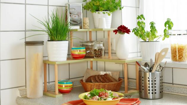 Пряные травы: как вырастить специи на подоконнике
