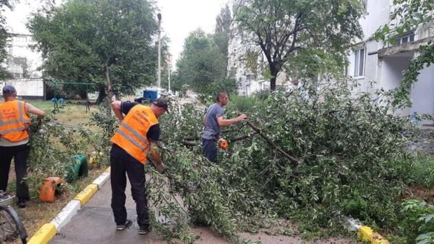 Поваленные деревья и обесточенные дома: на Крым обрушилась непогода (фото)