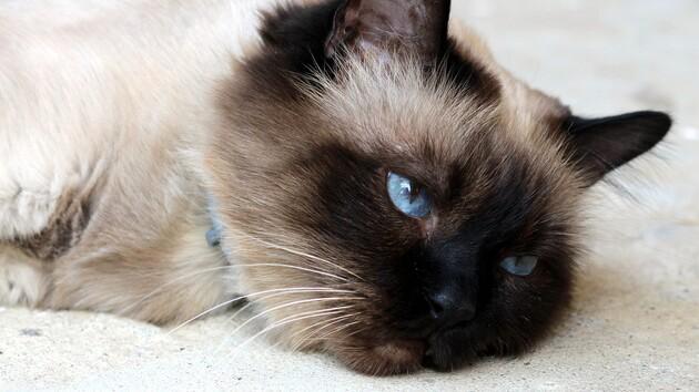 На фото показали кота, выжившего после стирки в машинке