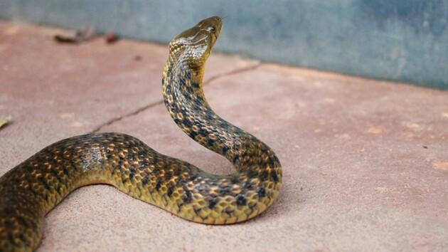 Мужчина нашел в ванной комнате змеиное гнездо: фото