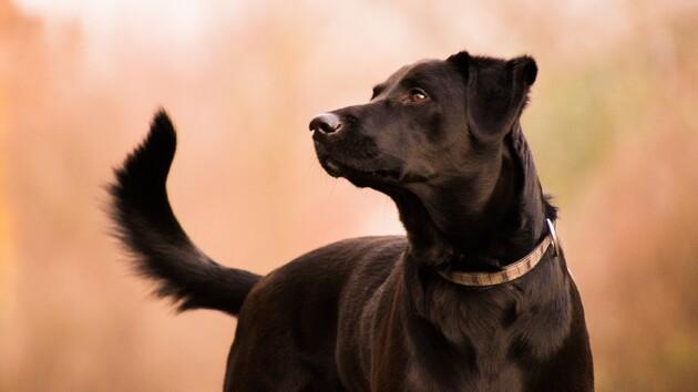 Хозяин бросил на улице своего пса и оставил записку: ее содержание шокирует