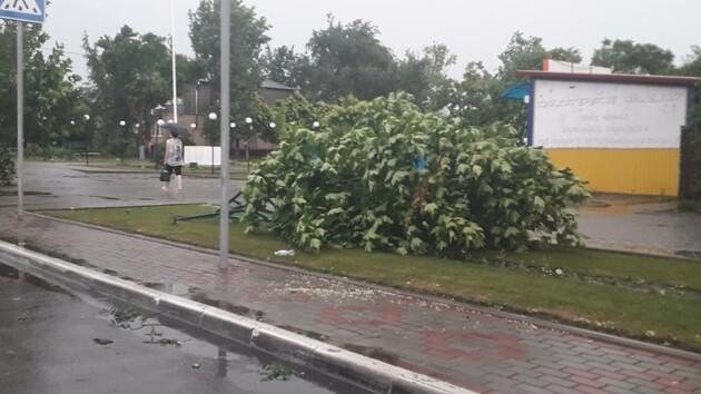 Побитые автомобили и деревья на дорогах: на Одесскую область обрушился ураган (фото, видео)