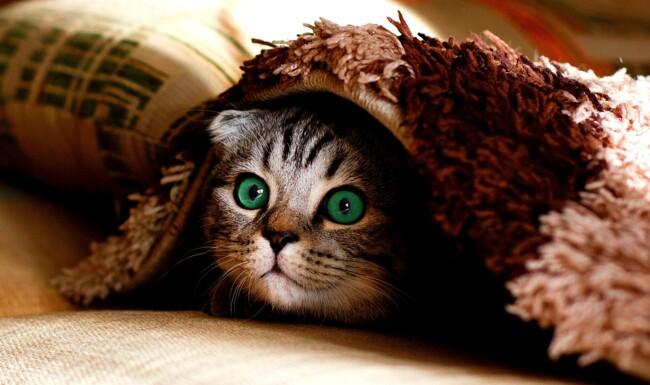 В пятницу 13 лучше вообще не вылезать из-под одеяла0