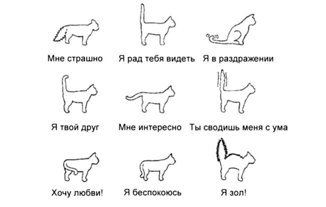 Емоції кішок
