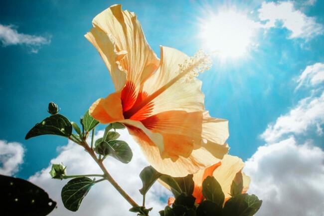 День літнього сонцестояння