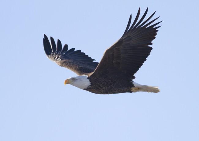 Орел, Одинокие и загадочные: животные, на которых похожи знаки Зодиака