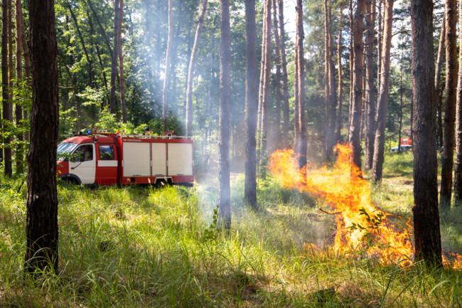 Чому не можна підпалювати суху траву та листя