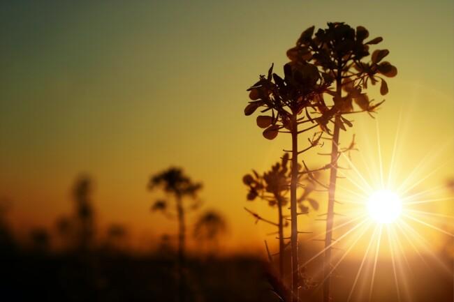 День осеннего равноденствия: традиции и ритуалы