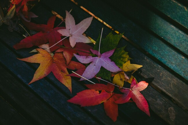 Вихідні дні у жовтні
