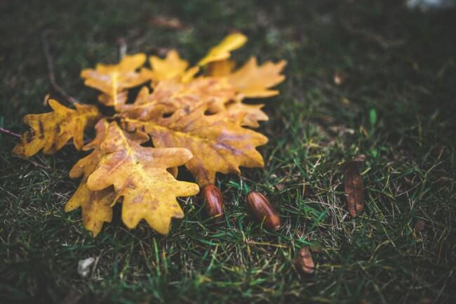 7 октября: какой сегодня праздник