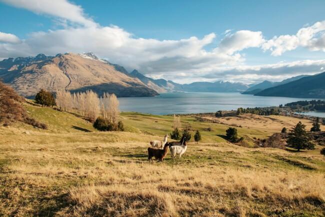 """Місця зйомок """"Володаря перснів"""" в Новій Зеландії"""
