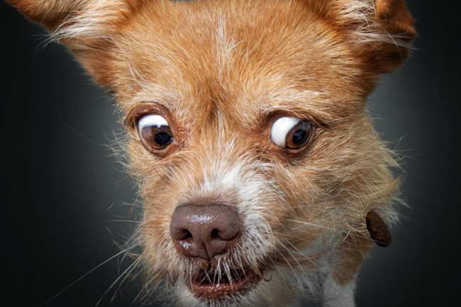 Крістіан Велер знімає на фото псів, які ловлять смаколики Фото: instagram.com/vieler.photography