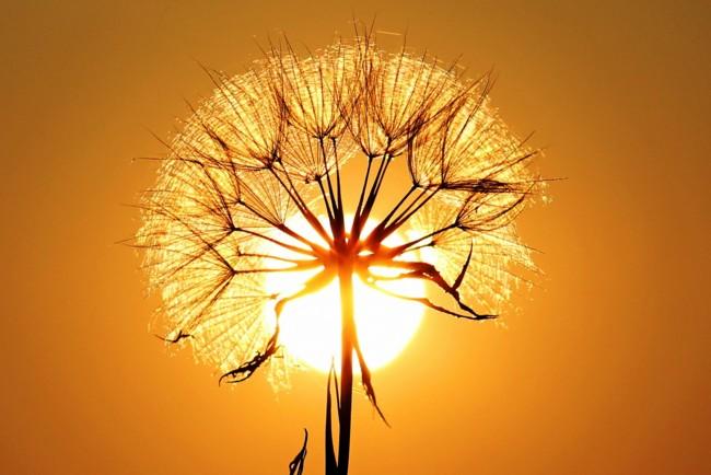 День літнього сонцестояння 2019: дата найдовшого дня року
