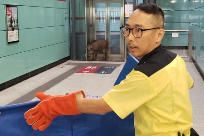 Дикий кабан на станции метро укусил пассажирку