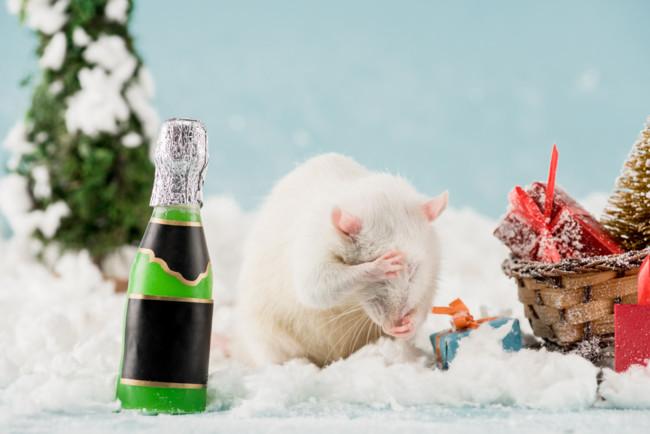 Как правильно встречать Новый год 2020, чтобы он был удачным и счастливым