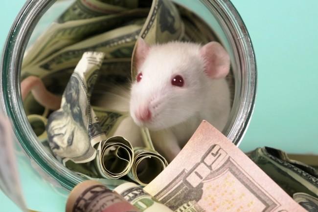 Финансовый гороскоп на 2020 год Крысы