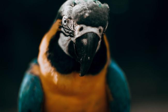 Женщина вызвала полицию из-за криков попугая о помощи Фото: Camila Cordeiro / Unsplash