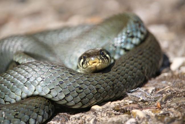 Жінка вступила в сутичку зі змією у вбиральні