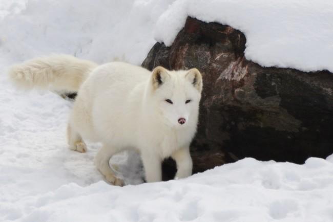 Изменения в Арктике отразятся на всей планете