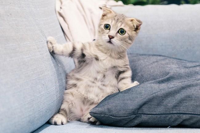 Кошки чудаковатые от природы или мы их просто неправильно понимаем?
