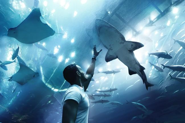 Дайвер накормил 50 акул и попал на видео