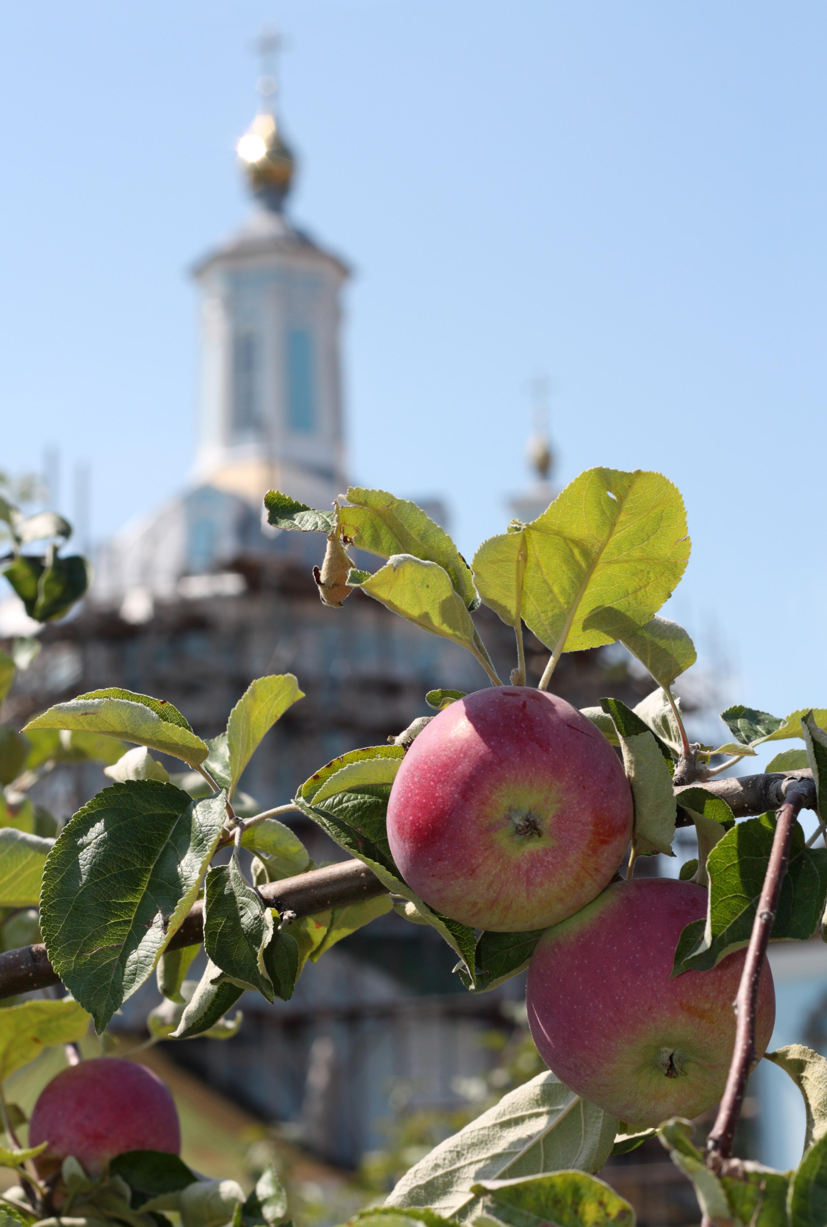 В праздник Преображения Господнего нужно освятить яблока