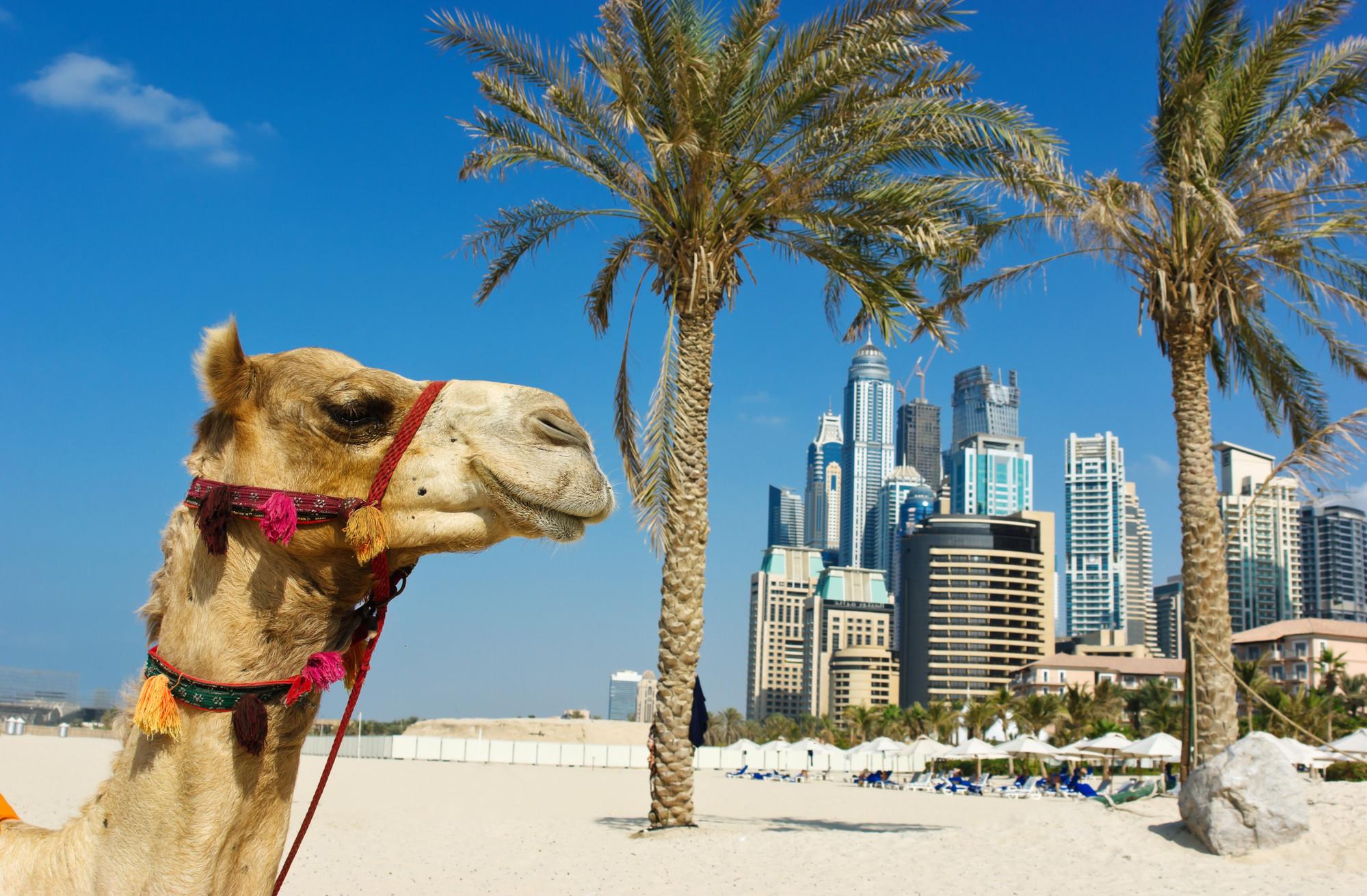 Пейзаж в ОАЭ