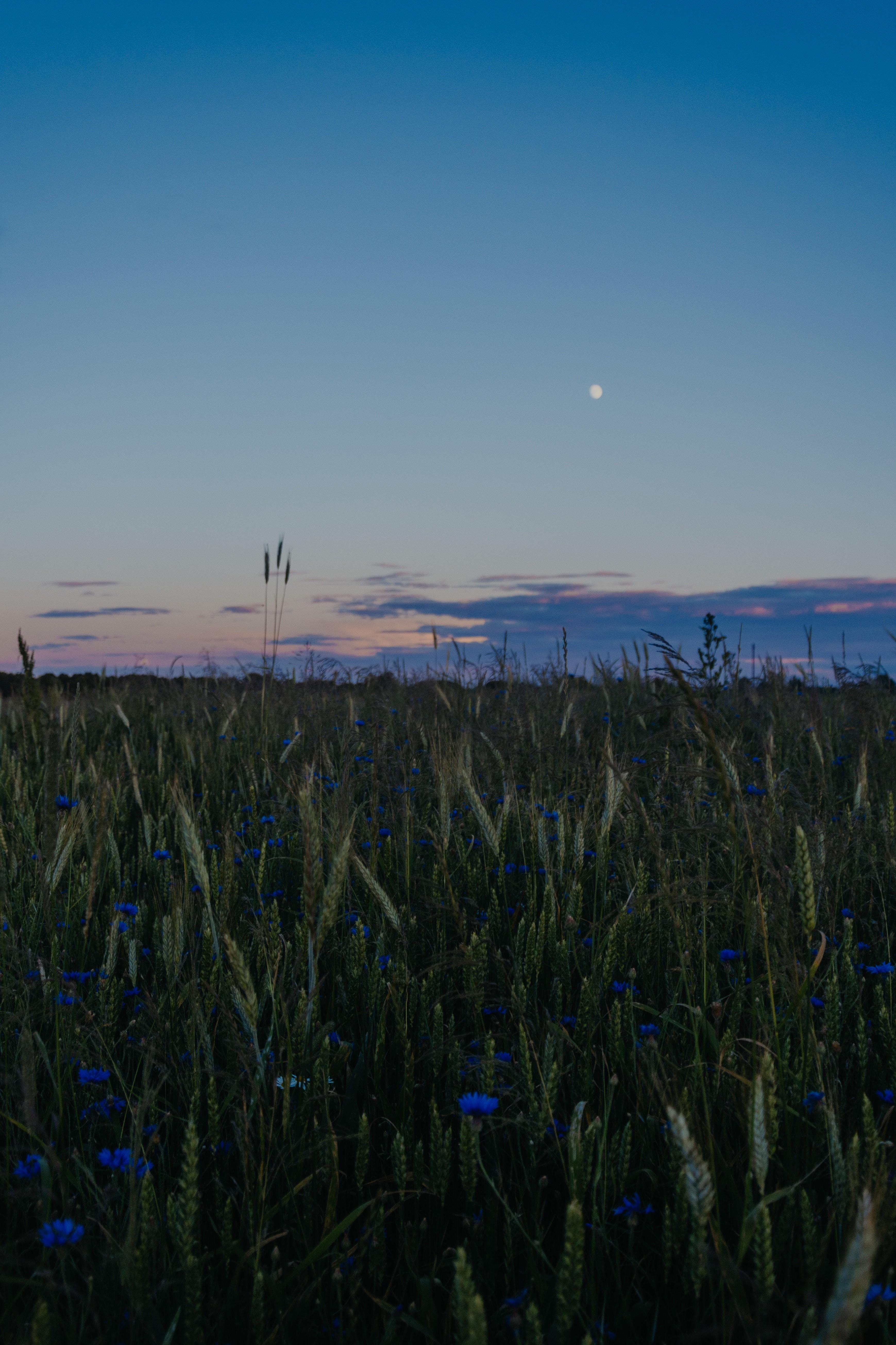 Урожайная Луна в пятницу 13 – что нельзя делать