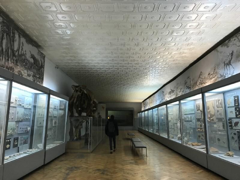 Национальный научно-природоведческий музей НАН Украины.