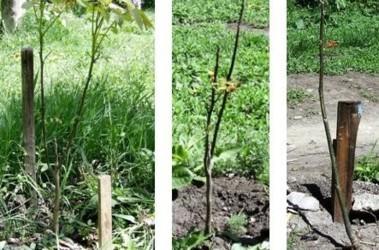 Одесские власти высаживали саженцы и поливали деревья в городских парках, фото popov-roman.com