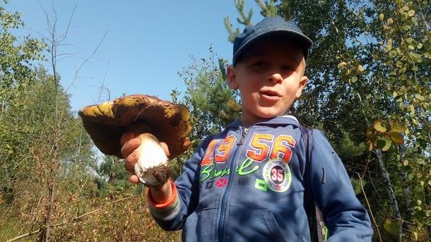 Грибники. В лесах очень много людей, собирает грибы даже детвора