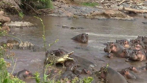 Битва. Фото: кадр з відео