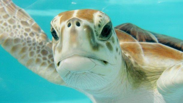 Из-за черепахи моряки обнаружили контрабанду. Фото: pixabay.com