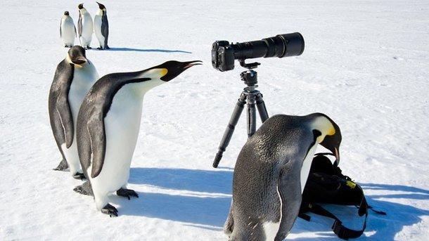 Пингвины всячески не дают работать. Фото: politeka