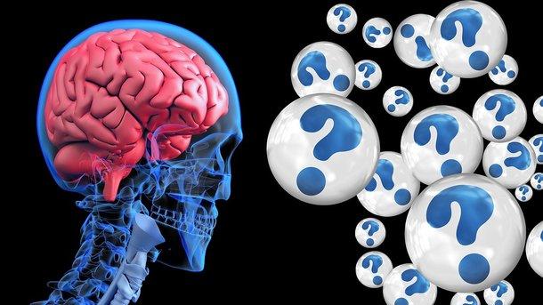 Ученые создали мини-мозг. Фото: pixabay