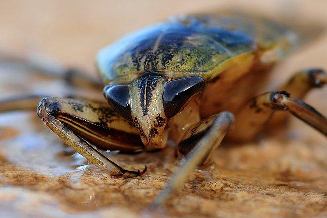 Таракан достиг немыслимых размеров. Фото: pixabay