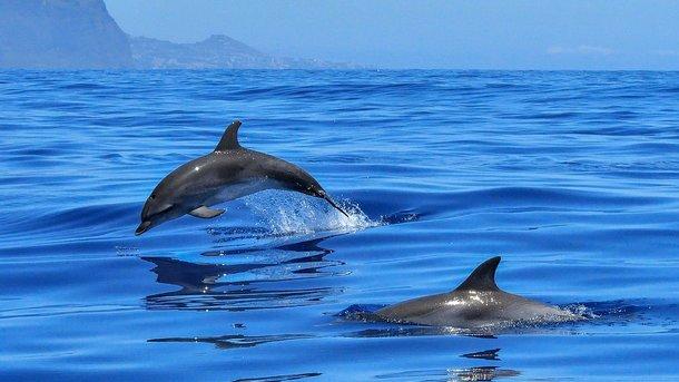 Дельфіна не вдалося врятувати. Фото