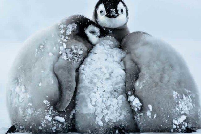 В Антарктиді була зафіксована нова рекордно низька температура на Землі