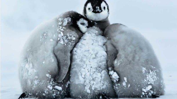 Температура в Антарктиді впала до -98,6 градусів. Фото: Gunter Riehle