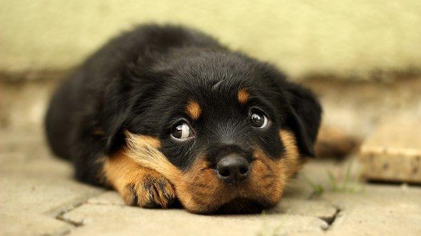 Собака врятував власницю. Фото: pixabay