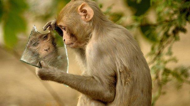 Мавпа задивилася у дзеркало. Фото: Prerna Jain
