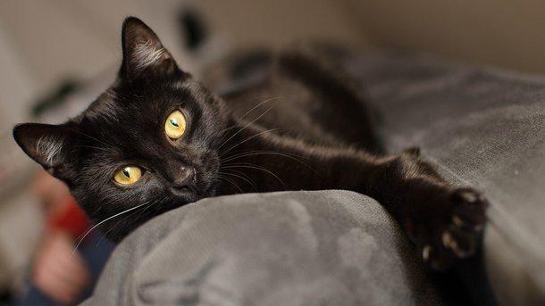 Кот выжил после пожара. Фото: pixabay