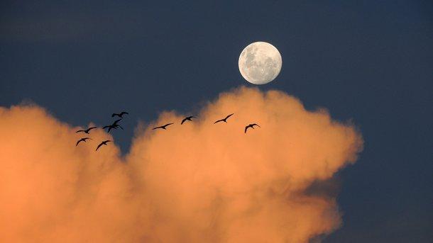 Луна без курса бывает каждые 2,5 дня. Фото: pixabay