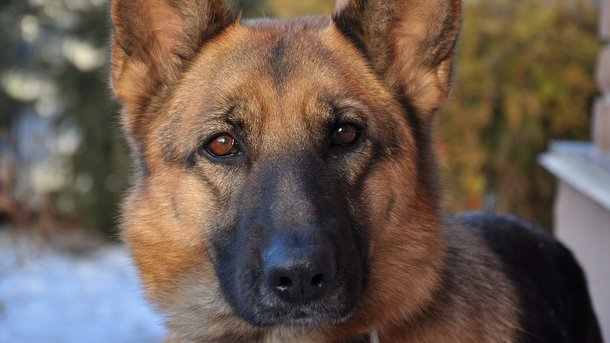 Пес спас семью от питона. Фото: pixabay